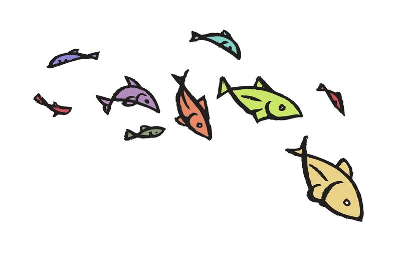 1.fish