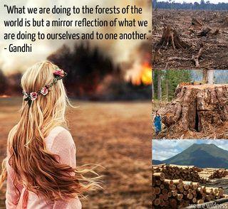 Forest gandhi quote