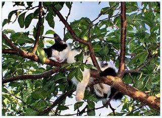 Sleeping-cat-in-tree