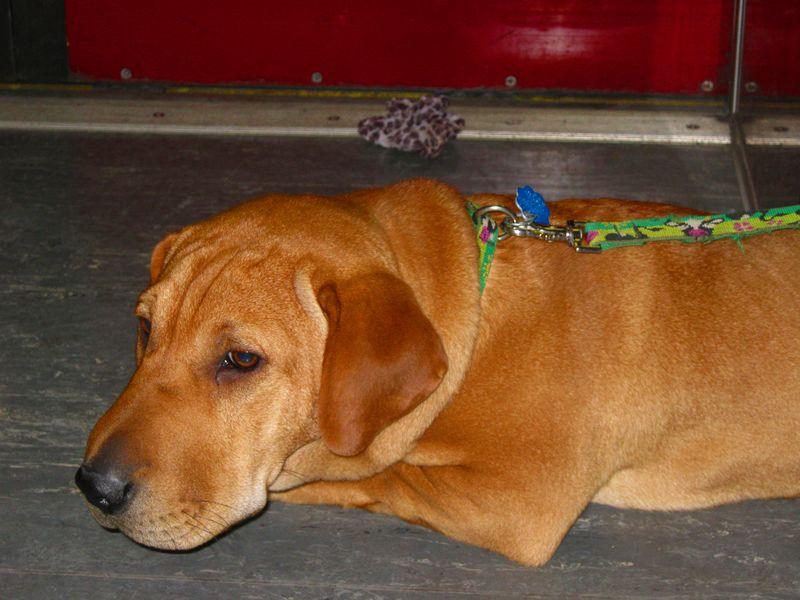Subwaydog