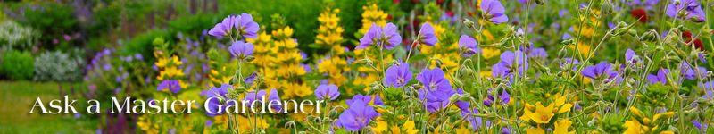 Ask_a_master_gardener