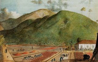 L'île Bourbon (L'île de la Réunion), 19e siècle