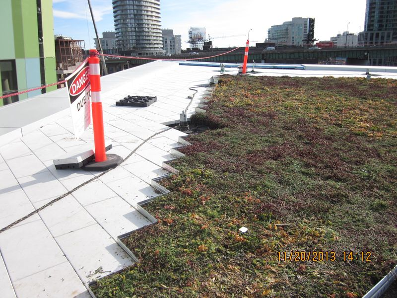Fort York Branch Toroto Public Library Green Roof November 2013