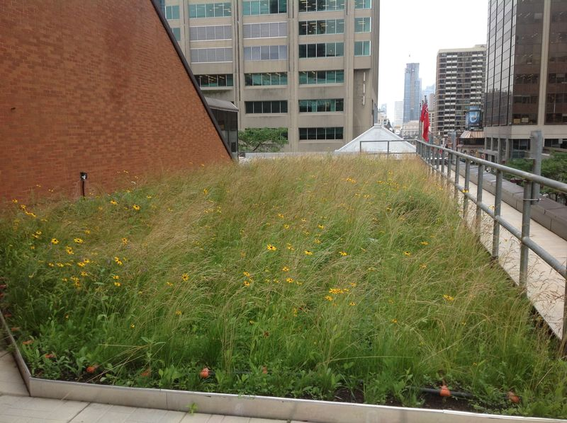 Green Roof Toronto Reference Library