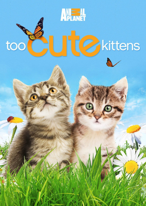 Too Cute Kittens