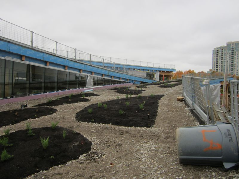 Scarborough Civic Centre Branch Toronto Public Library green roof  in progress with some plantings