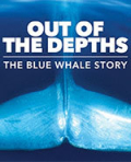 Blue_Whale_Story