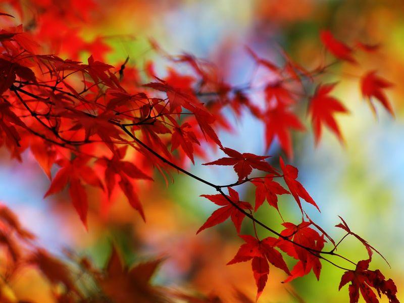 _autumn leaves