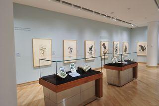 TD Gallery Audubon Birds of Americ