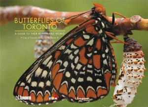Butterflies of Toronto