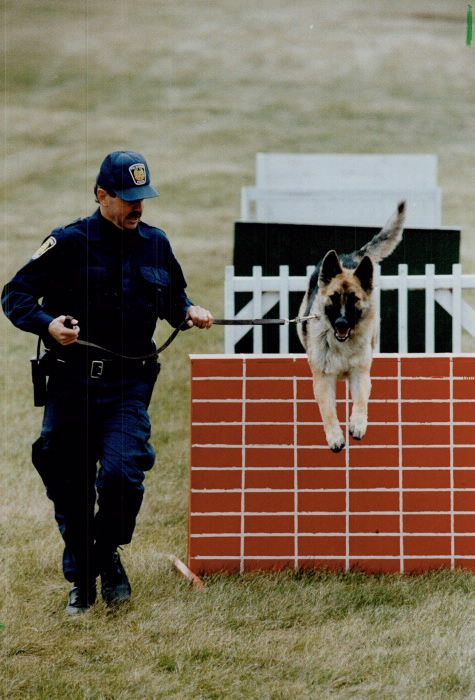 Man in police uniform leading a German shepherd as he jumps through an obstacle course