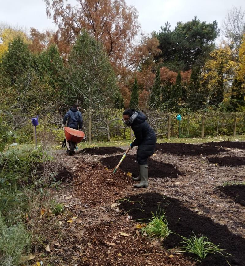 Spreading compost at the Toronto Botanical Garden's Teaching Garden
