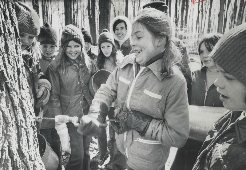 It's maple syrup time again -- tapping a maple tree in the Albion Hills Conversation Area in Caledon  1971