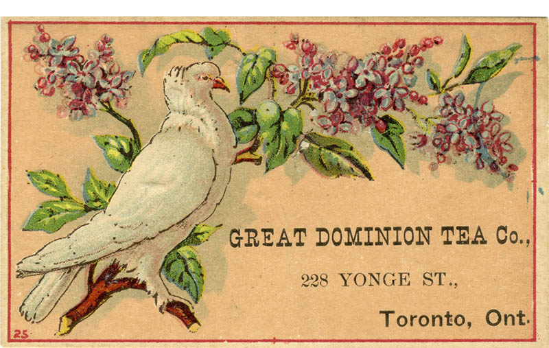 Postcard with bird on branch and text that reads Great Dominion Tea Co 228 Yonge Street Toronto Ontariojpg