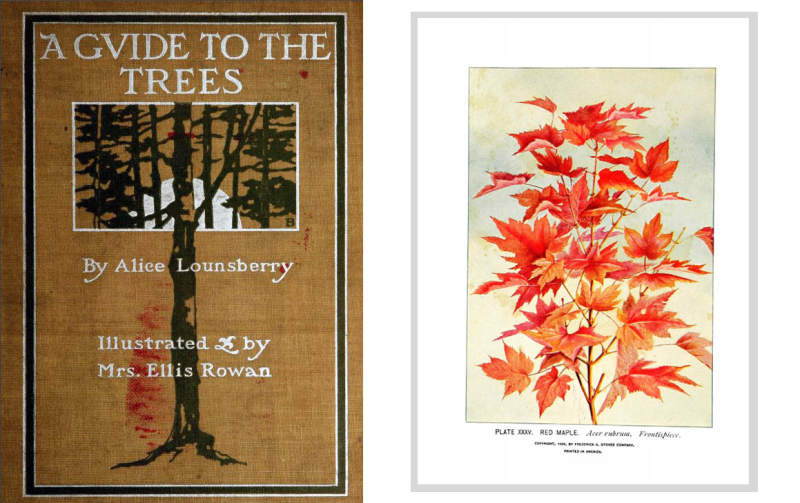Illustration of red leaves and a Book cover A Guide to the Trees by Alice Lounsberry illustrated by Mrs Ellis Rowan and