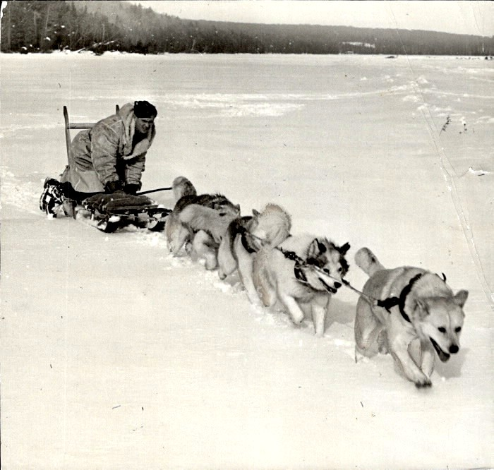 Four dogs pulling a men on a sled over snow