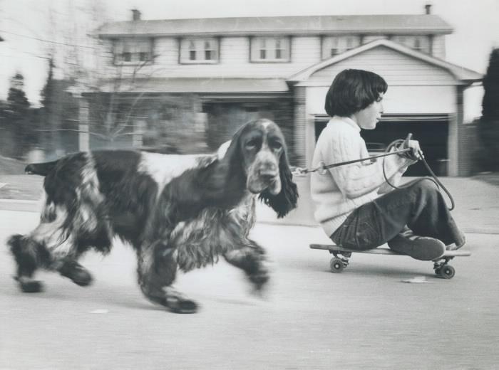 Boy sitting on skateboard holding leash of dog