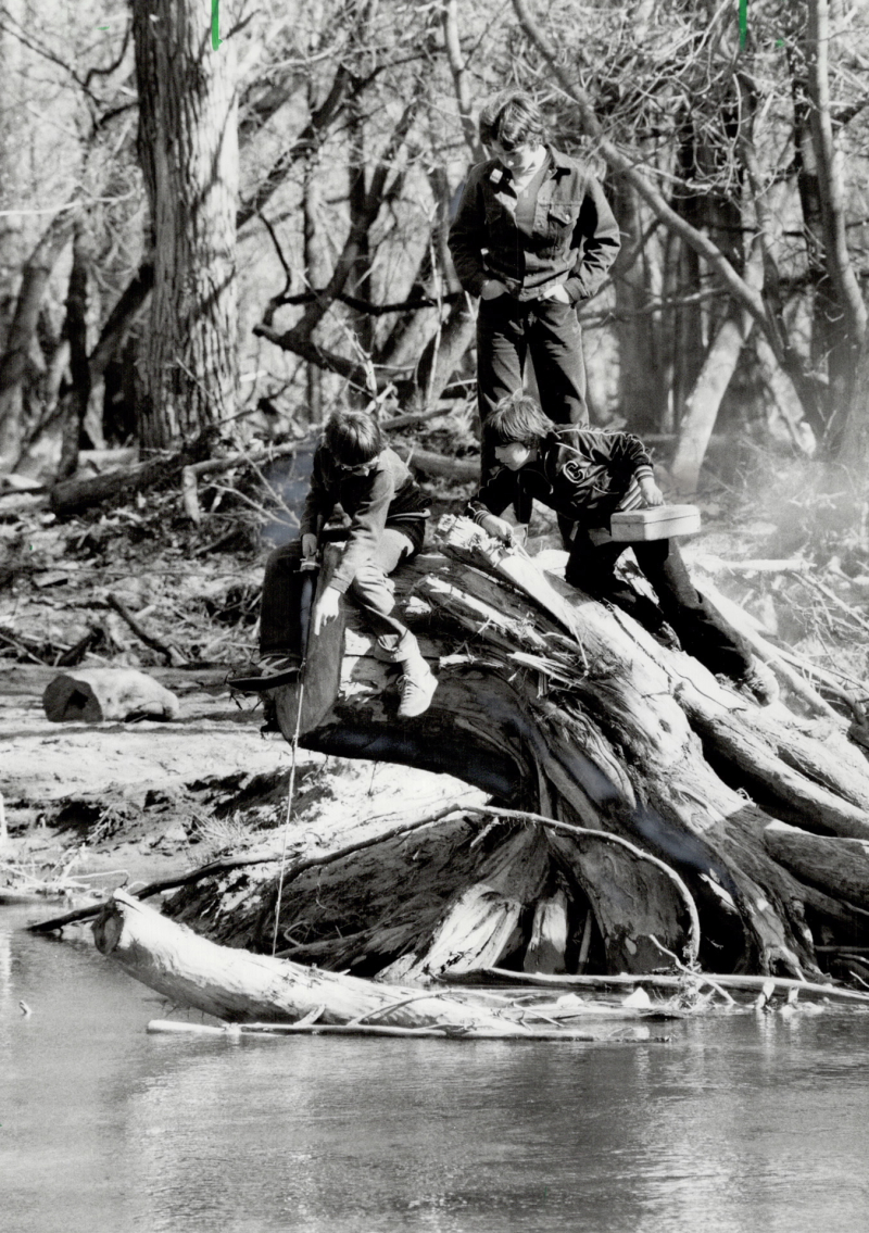 Three boys found an old tree root in the Oshawa Creek to be the ideal perch for a little Spring fishing  1987