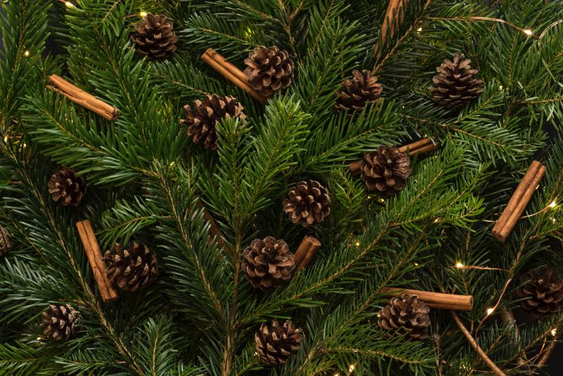 Christmas tree foliage