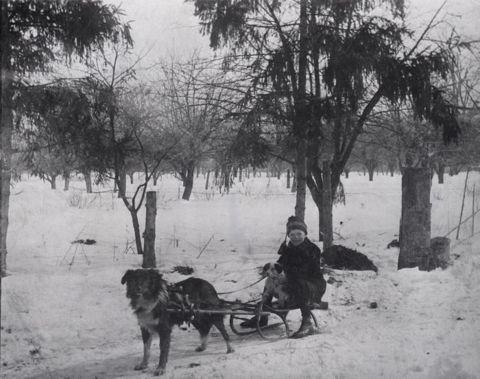Boy and small dog on sled with a larger dog in a harness to pull them