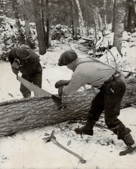 Photo of two men sawing a log at the Burwash correctional facility.