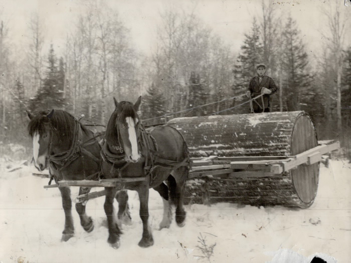 Man rides a large log pulled by two horses to clear a path for work on the correctional farm.