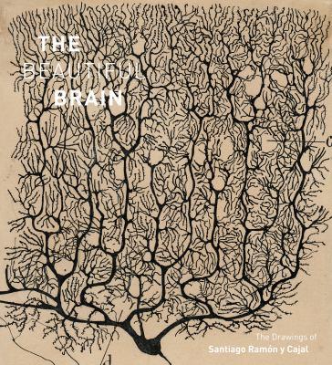 Beautiful Brain by Ramon y Cajal