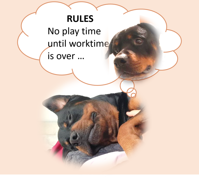Dog dreaming about rules: No playtime until work is over