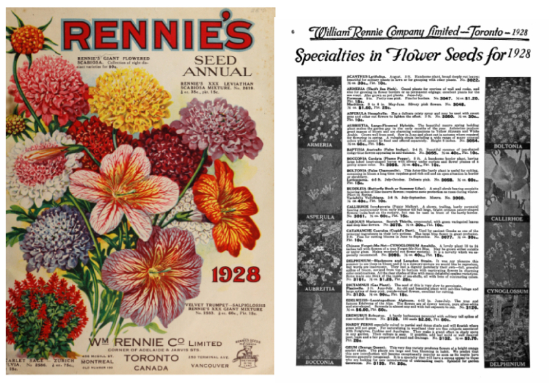 Two side by side pages one with illustrated flowers and cover text and the other with details in a catalogue of seeds for sale