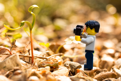 LEGO person photograping a small plant