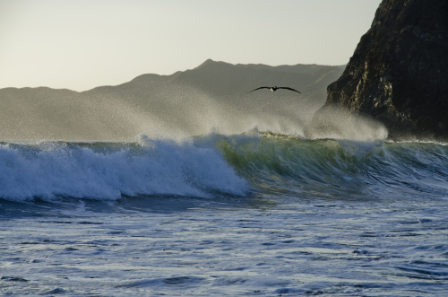 A sea bird flies above a powerful wave of water with mountains in the background.