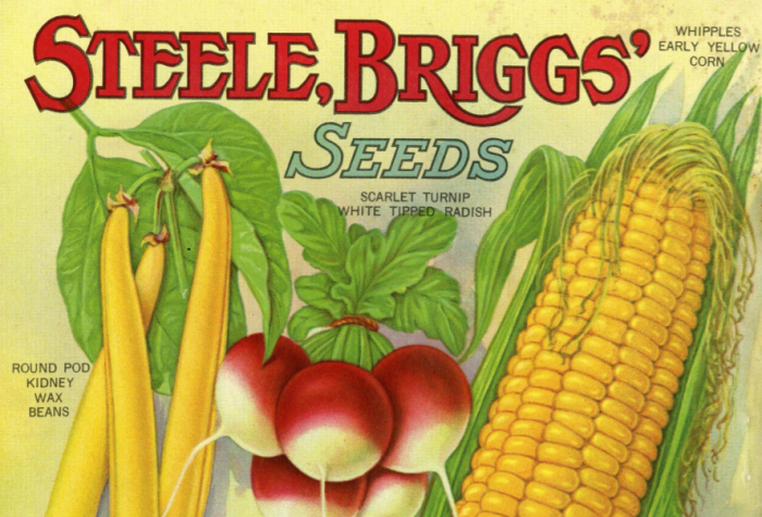 Illustrations of corn  turnips and beans on seed catalogue cover