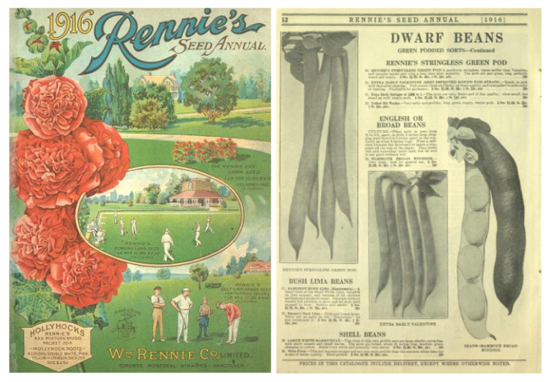 Two side by side pages one that is cover with illustration of golf grounds and flowers and the other showing inside page of seed catalogue beans of various kinds