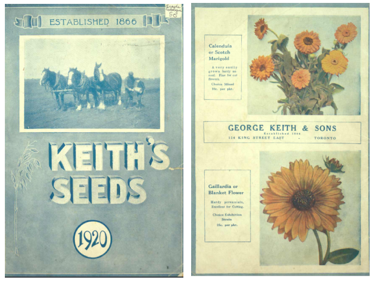 Cover showing photo of horses and two individuals and a back cover sowing marigold and blanket flower