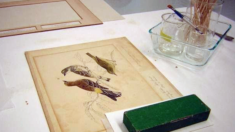 Drawing of birds in lab with weight placed on it and brushes and tools nearby
