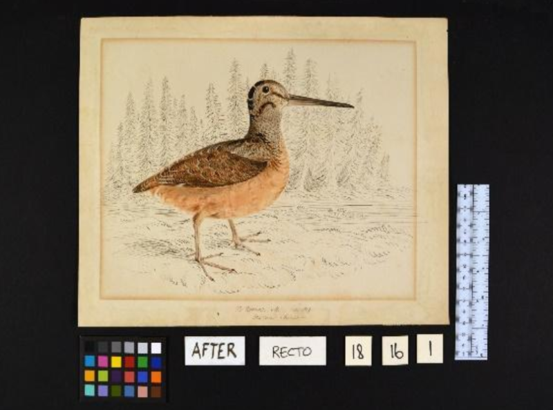 Flat paper drawing of bird with long beak