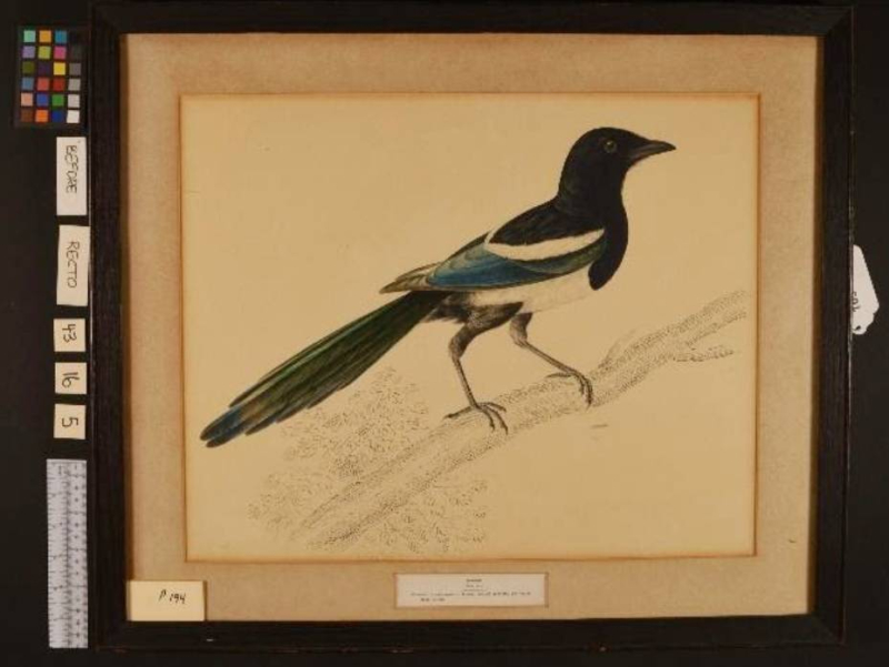 Illustration of black bird on old paper in frame withe surroundings of measurement tools