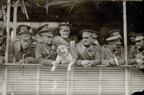 WWI soldiers and a bulldog