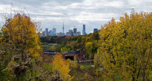 Trees with fall colours surrounding a view of the Toronto skyline in the distance