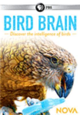 Cover of Bird Brain DVD